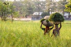 Indiska bönder Fotografering för Bildbyråer