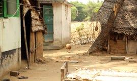 Indiska bykojor Arkivfoton