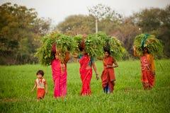 Indiska kvinnor fungerar på jordbruksmark Arkivfoto