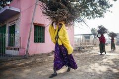 Indiska kvinnor som bär småskog på huvudet Arkivbilder
