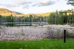 Indiskt damm i madamen Sherri Forest i New Hampshire Arkivfoton