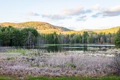Indiskt damm i madamen Sherri Forest i New Hampshire Arkivfoto