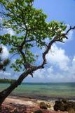 Indiskt hav Royaltyfria Bilder