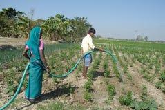 Indiskt jordbruk royaltyfria bilder