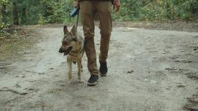 Indivíduo com o cão que apreciam uma caminhada no homem bonito do forestYoung e o cão mixbreed que vai ao longo da estrada secund video estoque
