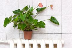 Individual heating concept. Flower on the radiator - individual heating concept stock photo