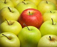 Individual - one different - red apple Royalty Free Stock Photography