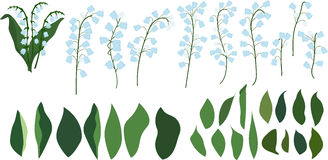 Individual parts of lilies of the valley on a transparent background, flowers and leaves Stock Photography