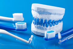 Individual plaster dental molds and toothbrushes. Individual plaster dental molds and various toothbrushes stock photos