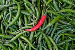 Individual red chili standing out on green chillie Stock Images