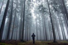 Individuale nella foresta nebbiosa di autunno immagini stock