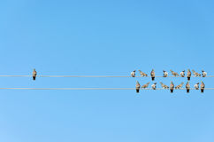 Individuality concept, birds on a wire Stock Photography