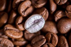 Individuality, standing out from a crowd concept, close up of a single bright, gold coffee bean over many dark ones with copy spac. E stock image