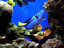 Individuazione del Dory del Nemo fotografie stock libere da diritti