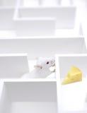 Individuazione del formaggio   Fotografia Stock