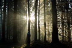 Individuo joven con una mochila que se coloca en un bosque en la niebla en la salida del sol Fotografía de archivo libre de regalías