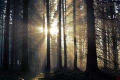 Individuo joven con una mochila que se coloca en un bosque en la niebla en la salida del sol Imagen de archivo libre de regalías