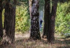 Individuo misterioso detrás de árboles Fotos de archivo