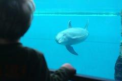 Individuos y delfín Foto de archivo