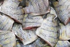 Indo-ειρηνικό λοχίας ή υπόβαθρο ψαριών vaigiensis Abudefduf Στοκ φωτογραφία με δικαίωμα ελεύθερης χρήσης