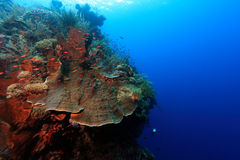 Indo pacific coral reef Stock Photos