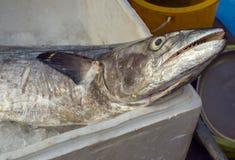 Indo-Pacific King mackerel, Spotted mackerel Stock Photo