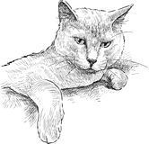 Indolente Katze Stockfotografie
