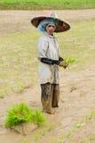 Indonésia, Arroz-trabalhadores imagens de stock