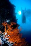 Indonésia de superfície próxima coral Sulawesi Imagens de Stock Royalty Free