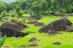 Indonésia, Sulawesi, Tana Toraja, terraços do arroz Imagem de Stock Royalty Free