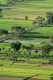 Indonesië Ricefield Royalty-vrije Stock Foto