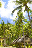 Indonesia. Bali. Hut under palm trees Stock Photos