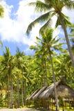Indonesia. Bali. Hut under palm trees. Landscape Stock Photos