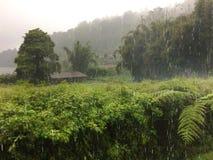 indonesia bali La naturaleza tropical debajo del cielo de la tormenta Foto de archivo