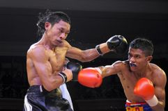 INDONESIA BOXING FIGHT Stock Photography