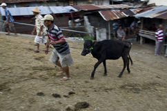 INDONESIA CATTLE MARKET Stock Image