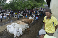 INDONESIA CATTLE MARKET Stock Photo