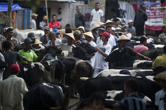 INDONESIA CATTLE MARKET Royalty Free Stock Photos