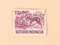 INDONESIA - CIRCA 1970: A stamp printed in Indonesia shows a mouse deer, circa 1970 stock photos