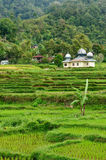 Indonesia countryside on the Sumatra island Royalty Free Stock Photo