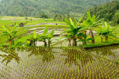 Indonesia countryside on the Sumatra island Royalty Free Stock Images