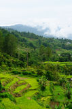 Indonesia countryside on the Sumatra island Stock Photos