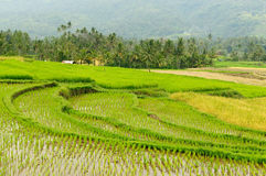 Indonesia countryside on the Sumatra island Stock Image