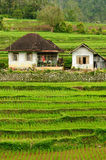 Indonesia countryside on the West Sumatra island Royalty Free Stock Images