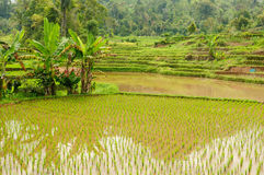 Indonesia countryside on the West Sumatra island Stock Photo
