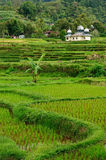Indonesia countryside Royalty Free Stock Photography