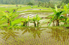 Indonesia countryside Stock Image