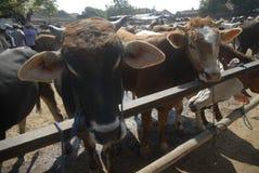 INDONESIA ECONOMY FOOD MEAT BEEF SHORTAGE MARKET Royalty Free Stock Photo