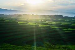 Indonesia för fält för skönhetmorgonrisfält panorama norr bengkulu arkivfoton