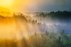 Indonesia för skönhetmorgonskog panorama arkivfoton